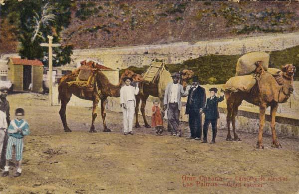 Caballeros y camellos