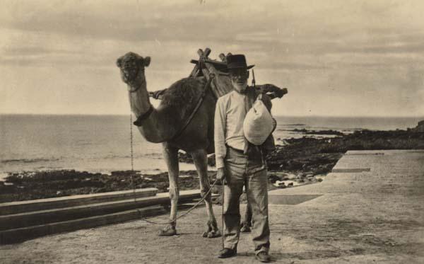Camellero viejo