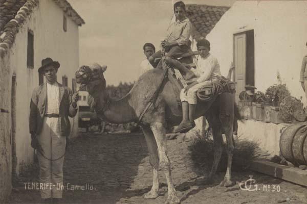 En camello