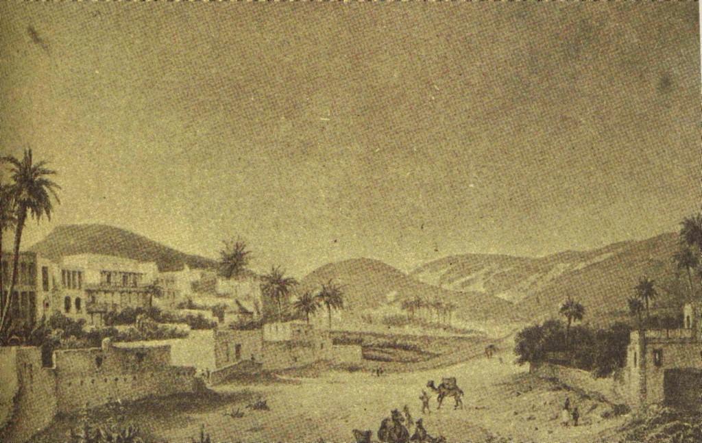 Historia camellos 4