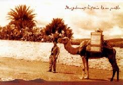 Historia camellos 8