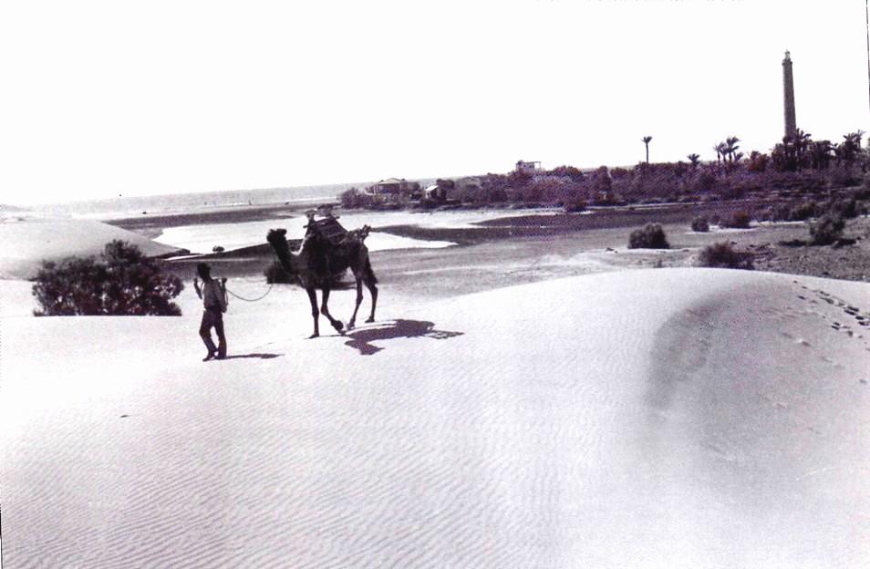 Historia camellos 9