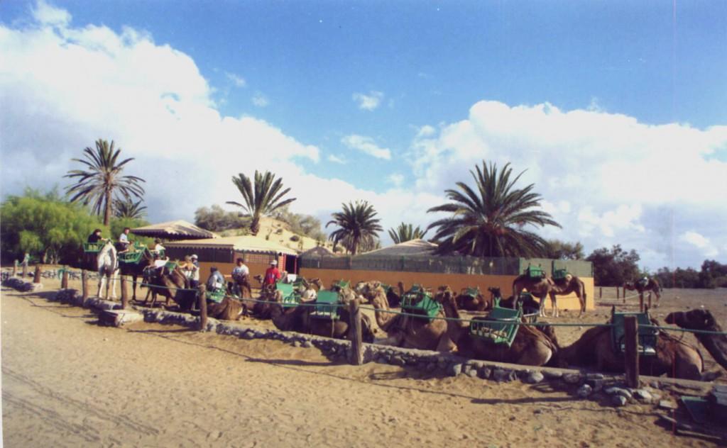 Kamelstation