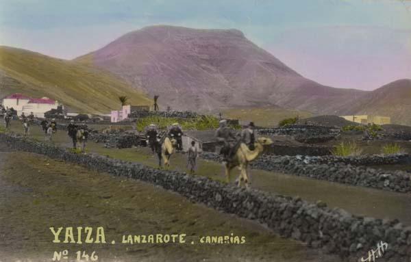 camellos en finca