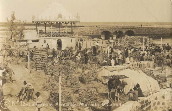 camellos en mercado