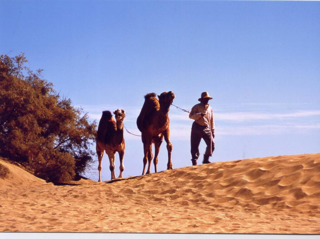 Mulud y camello